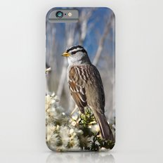 White-crowned Sparrow iPhone 6s Slim Case
