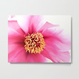 Altered Peony Metal Print