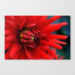 Fire red dahlia Canvas Print