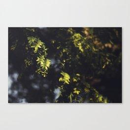 Green Textured Leaf Canvas Print