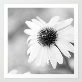 Beautiful Echinacea Flower Black and White Art Print