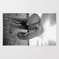 south africa Area & Throw Rugs featuring African Elephant, South Africa by Shannon Wild