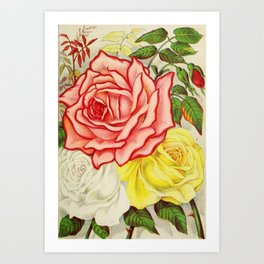 Vintage Multi Colored Rose Illustration (1886) Art Print