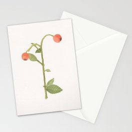 Pyracantha berries Stationery Cards
