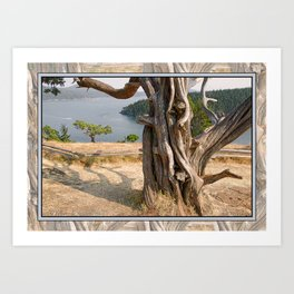 OLD JUNIPER AT BURROWS PASS ANACORTES Art Print