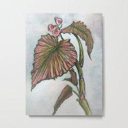 My Begonias Metal Print