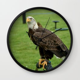 Bald eagle awaits Wall Clock
