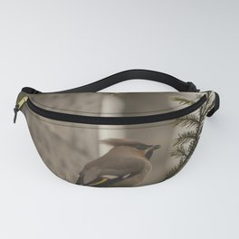 A bohemian waxwing on a pine tree branch Fanny Pack