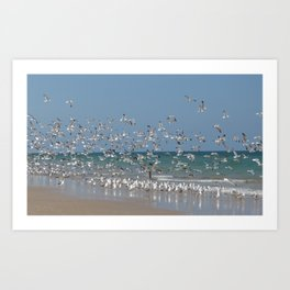 A Flock of Seagulls Art Print