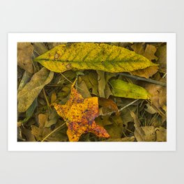 The Fall Collection Art Print
