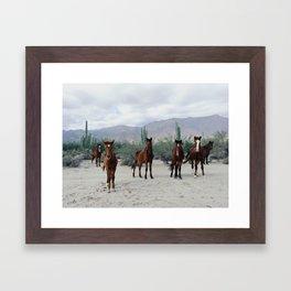 Bahía de los Ángeles Wild Horses Framed Art Print