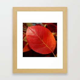 Autumn coppery red Juneberry berry leaf Framed Art Print