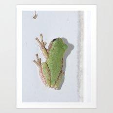 tree frog 2015  Art Print