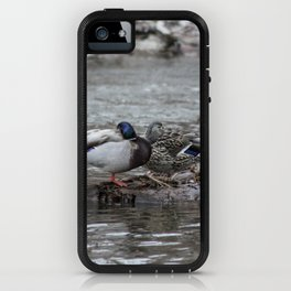 Napping Lovebirds iPhone Case