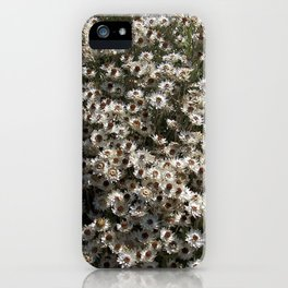 """Helichrysum Stellatum"" by ICA PAVON iPhone Case"