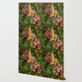 Emerging Poppy Wallpaper