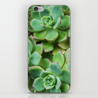 succulents iPhone & iPod Skins featuring Succulents by Michelle McConnell