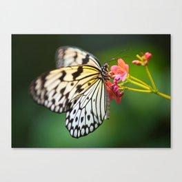 Believe in Fairies Canvas Print