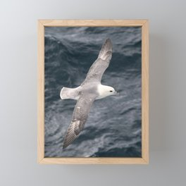 Seagull flying over Arctic Ocean Framed Mini Art Print
