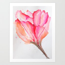 Bold Pink and Peach Spring Tulip Art Print