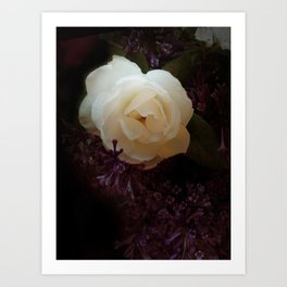 """""""Fragrant branch, thou didst promise me that thou hadst for me love-""""-""""Róisín Dubh"""" Art Print"""