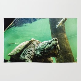 An Alligator Snapping Turtle  Rug