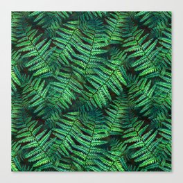 Among the Fern in the Forest Canvas Print
