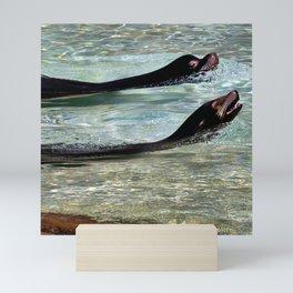 SEA LIONS at the ZOO Mini Art Print