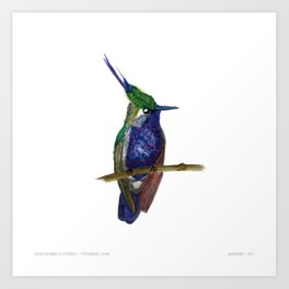 Green-crowned Plovercrest Art Print