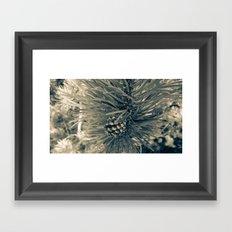 Spruce Pine Framed Art Print