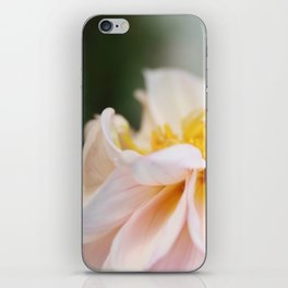 White Pink Dahlia Flower Photography iPhone Skin