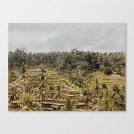 ubud rice terraces Canvas Print