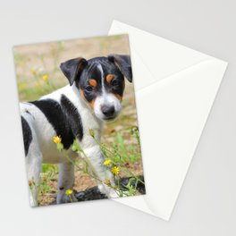 Jack-russell terrier puppy careful Stationery Cards
