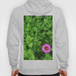 Top view of Yellow cosmos or Sulfur cosmos bush with a blooming pink Zinnia flower. Hoody