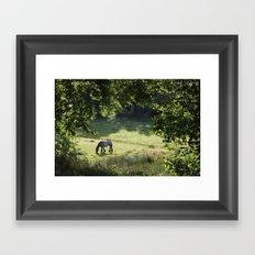 Horse in Meadow Framed Art Print