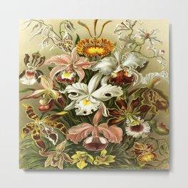 Ernst Haeckel Kunstformen der Nature Orchids Metal Print