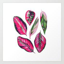Calathea pink leaves Art Print