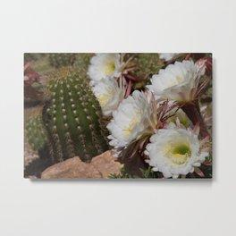 Desert Bloom Cactus in White and Green Metal Print