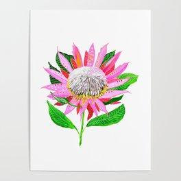Pink Banksia Poster
