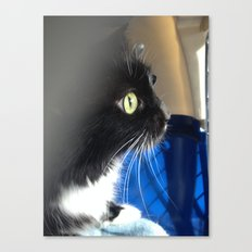 Butters the cat Canvas Print