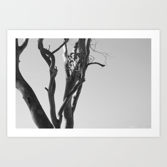 Now You See The Tree Art Print