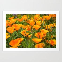 California Poppies Super Bloom Art Print