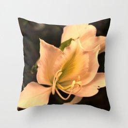 Bauhinia in golden light Throw Pillow