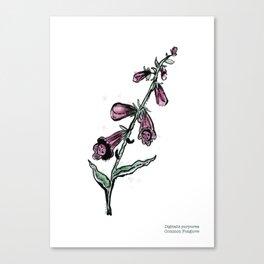 Digitalis purpurea Canvas Print