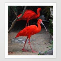Scarlet Art Print