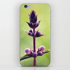 Lonesome Purple iPhone & iPod Skin
