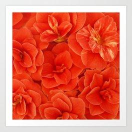Red Camelias... Art Print