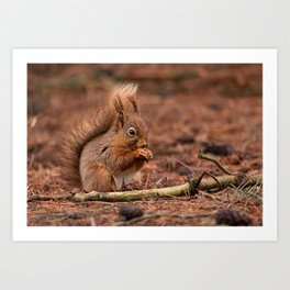 Nature woodland animals Red squirrel by a log Art Print