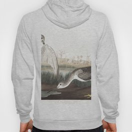 Tell tail goodwit or snipe, Birds of America, Audubon Plate 308 Hoody
