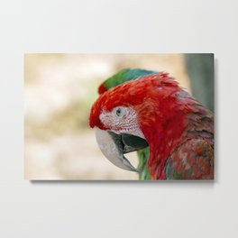 Green Winged Macaw Portrait Metal Print